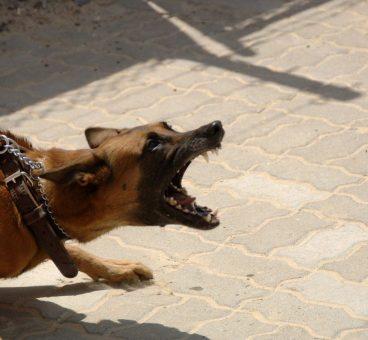 la rabia en perros