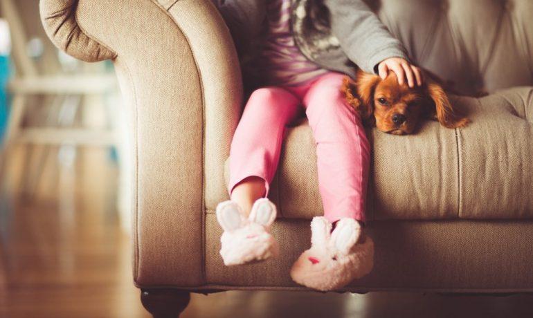 cuidado de las mascotas en casa