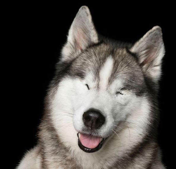 perros discapacitados mya