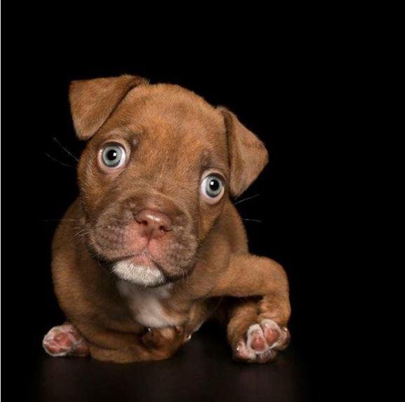 perros discapacitados malformacion