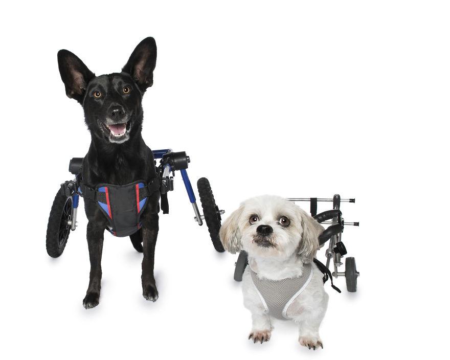perros discapacitados silla