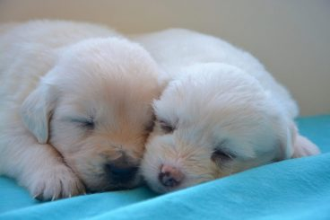 lactancia en perros