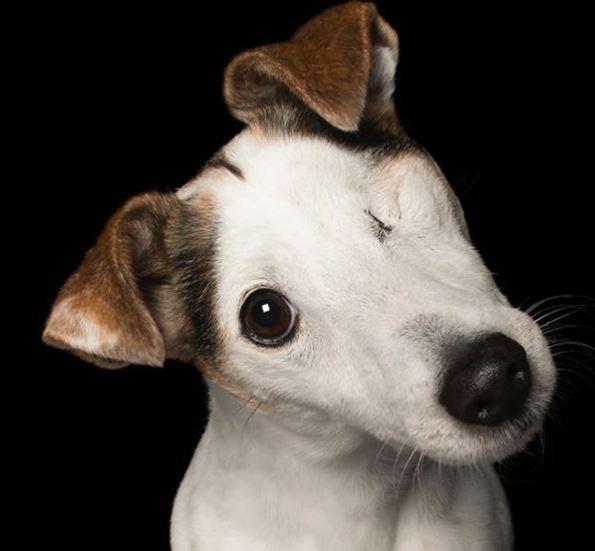 perros discapacitados ojo