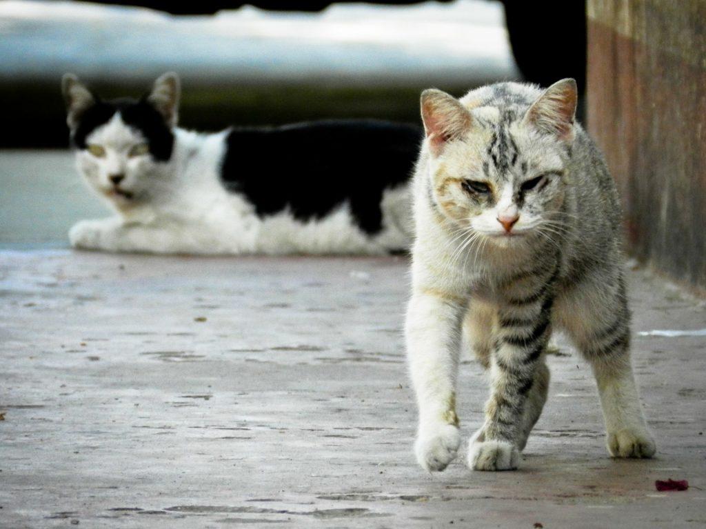 vida de los gatos callejeros