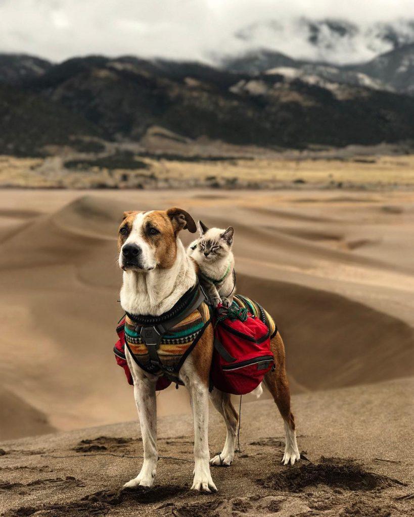 henry y baloo de excursion