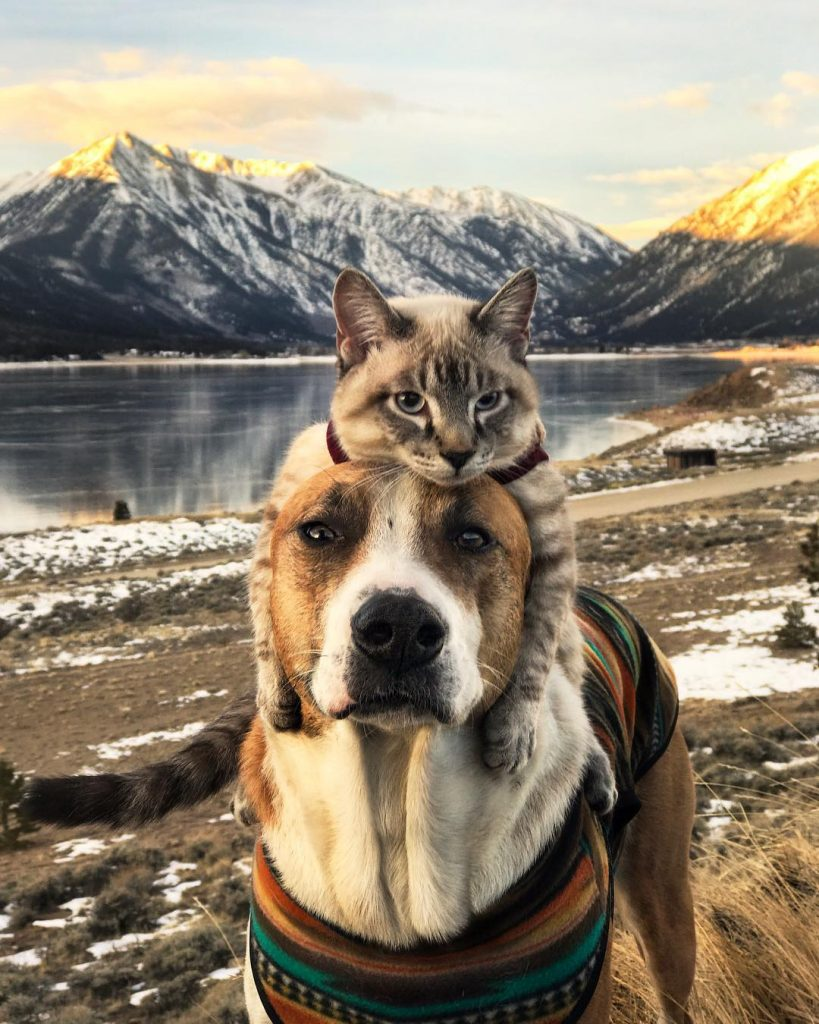 amistad entre henry y baloo en la naturaleza