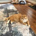un gato llamado toby