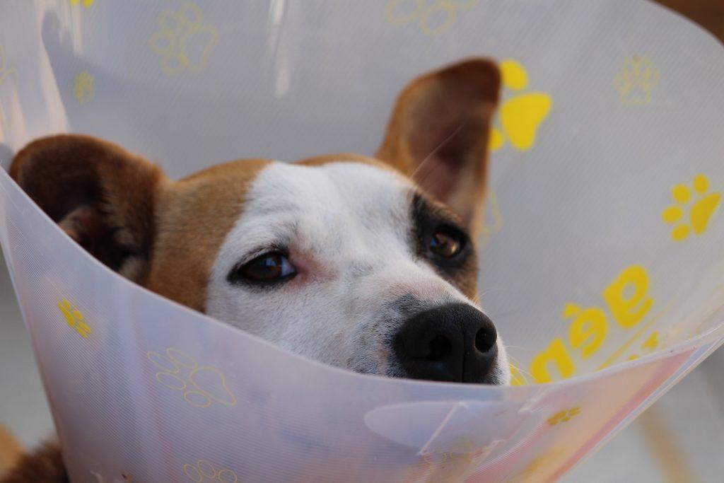 las ventajas de contratar un seguro para mascotas