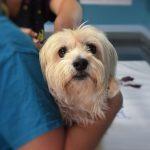 ventajas del seguro para mascotas