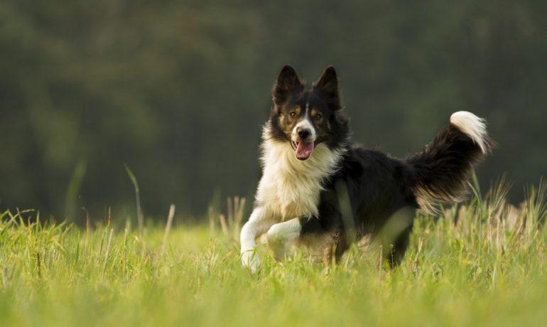 instintos caninos
