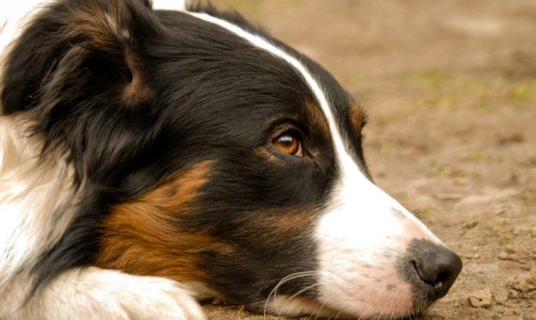como educar a un perro sordo