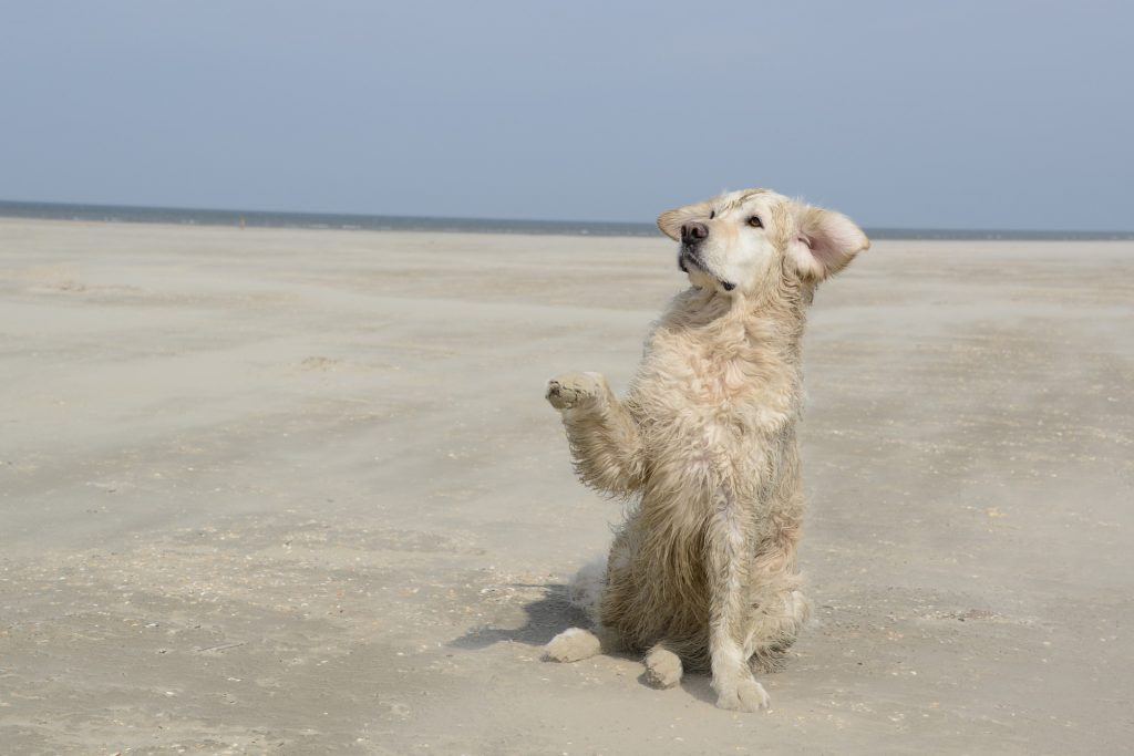 instintos caninos señalar