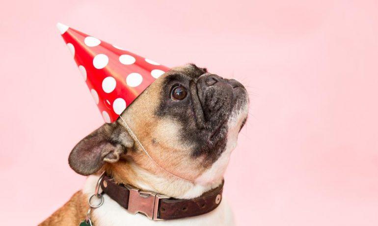 fiesta cumpleaños para perros