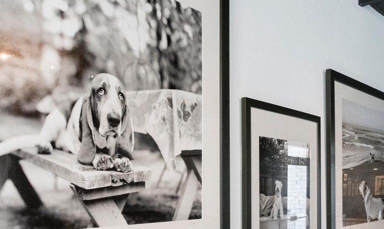 museo de perros