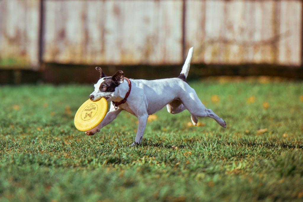 deporte con tu perro discdog