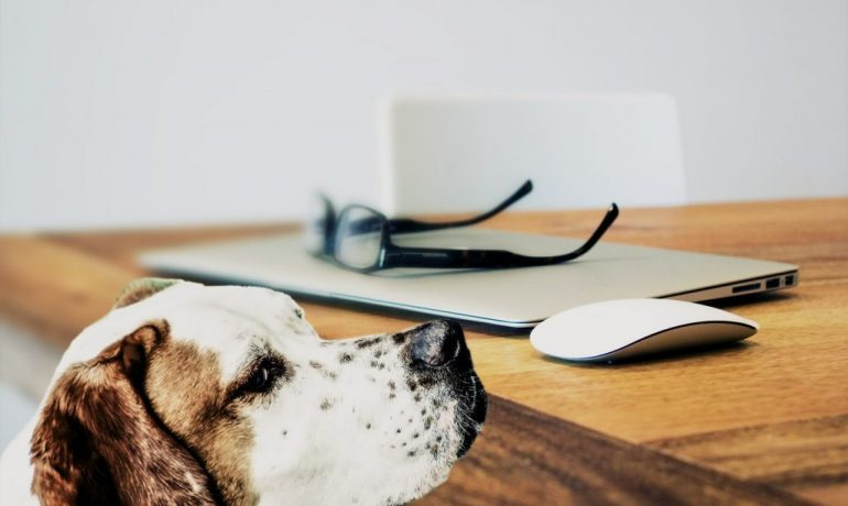 ventajas de oficinas pet friendly