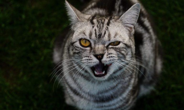 causas del estrés felino