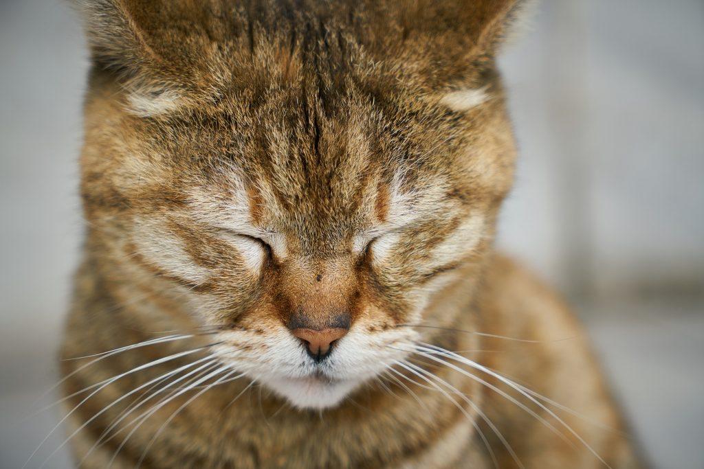 causas del estres en gatos