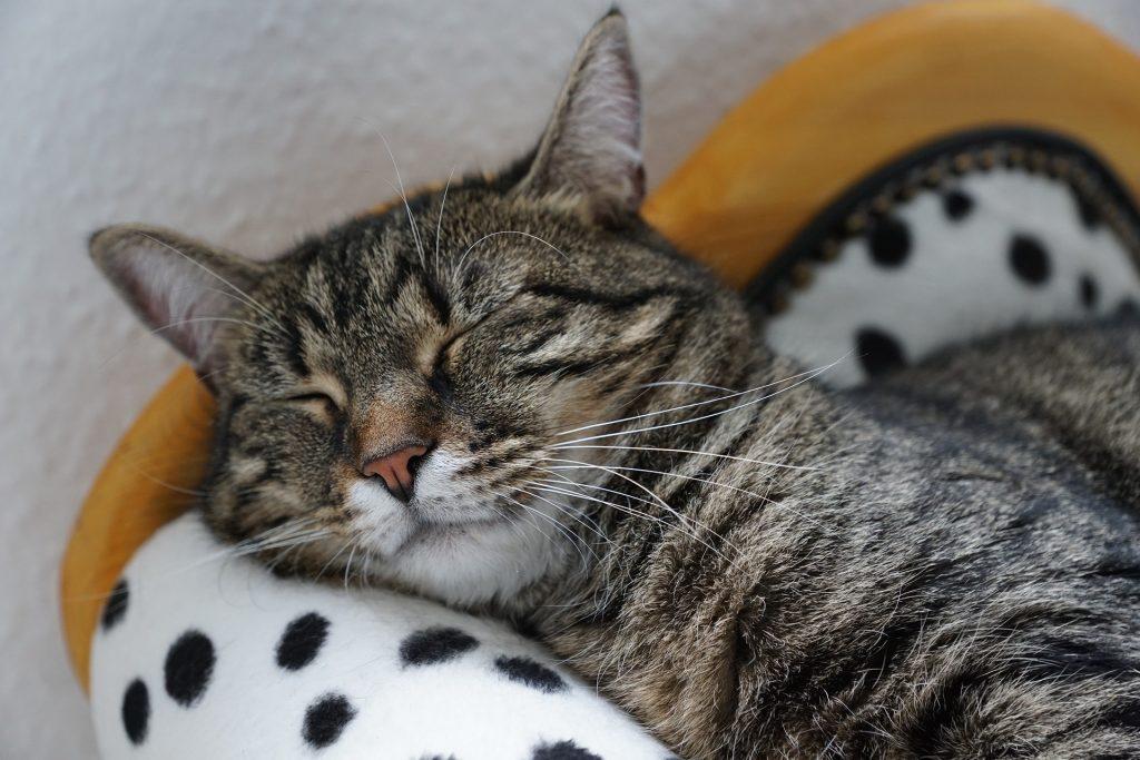 cosas que puedes hacer para tener un gato contento