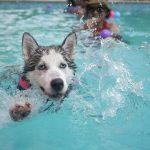 deporte con tu perro natación
