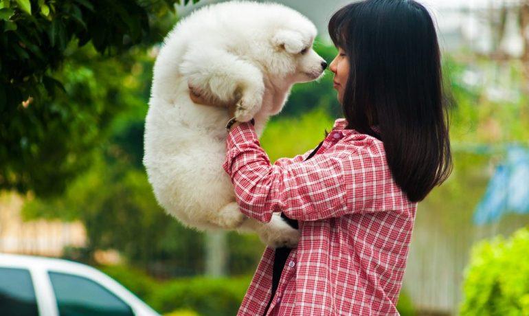 consejos para ahorrar en el cuidado de tu mascota