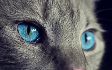 motivos- por-los-que-a-mi-gato-le-llora-un-ojo
