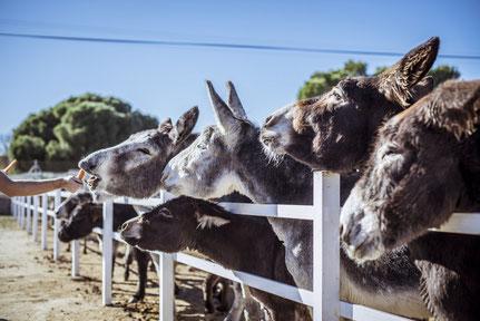 burros-cuidados-en-burrolandia