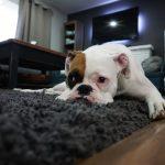 como mantener la casa limpia con perros