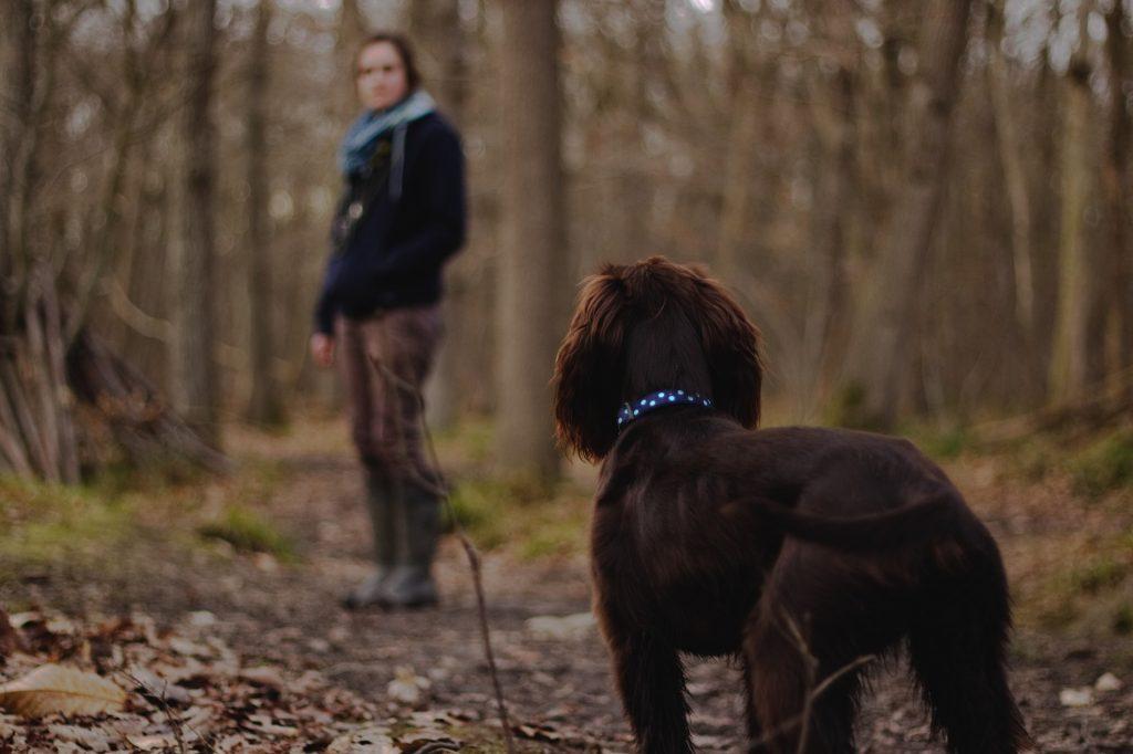 como-pasear-a-mi-perro-consejos-practicos