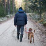 consejos sobre como pasear a mi perro