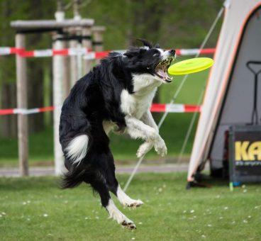 deporte-disc-dog