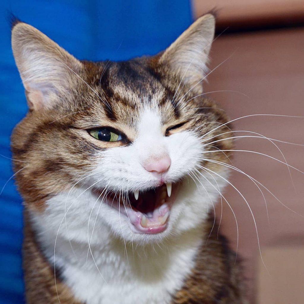 rexie-el-gato