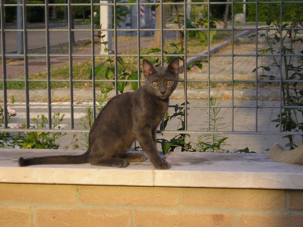 anorexia felina o anorexia en gatos