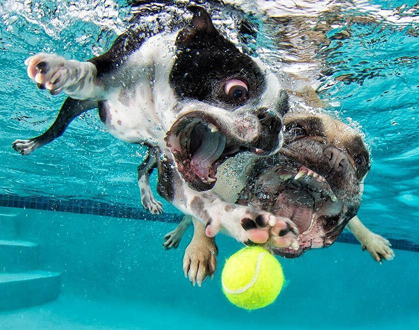 dos perros bajo el agua
