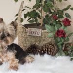 consejos para hacer fotos con mascotas