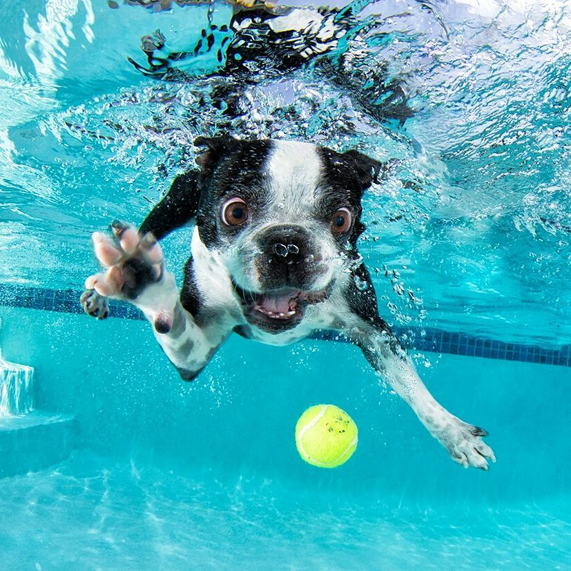 fotos de perros bajo el agua nadando