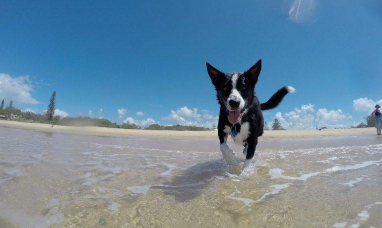 como hacer a un perro feliz en verano