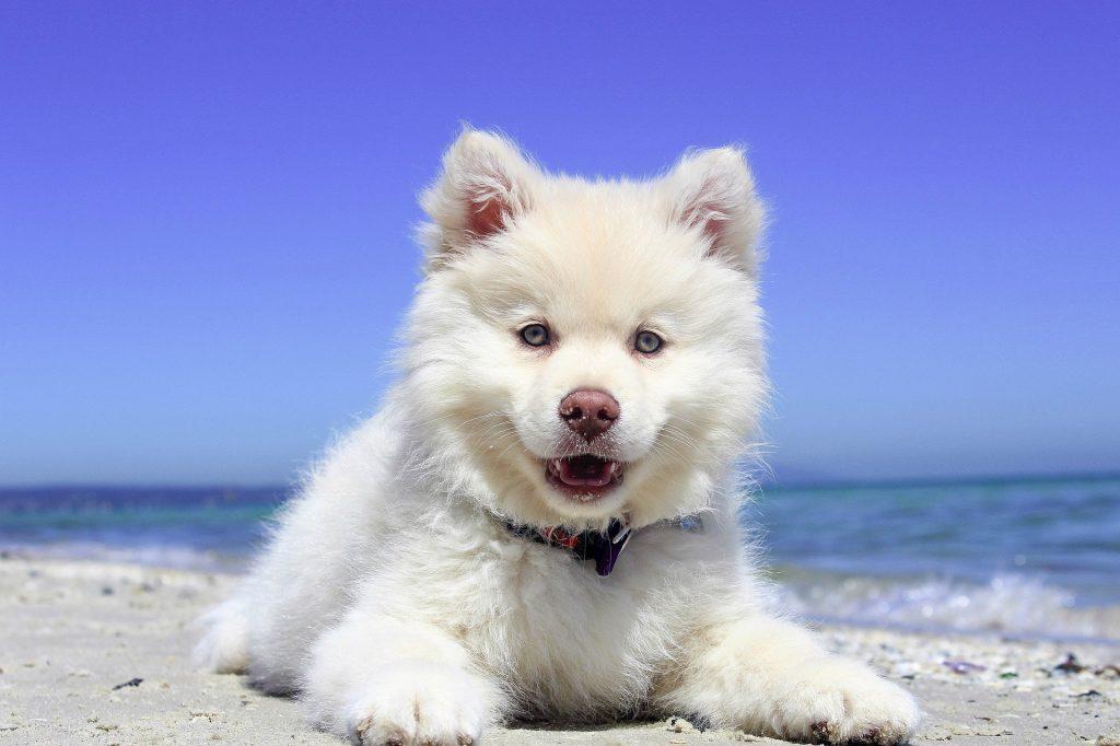 ir a la playa con perros 2018