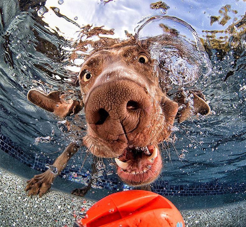 mas perros bajo el agua