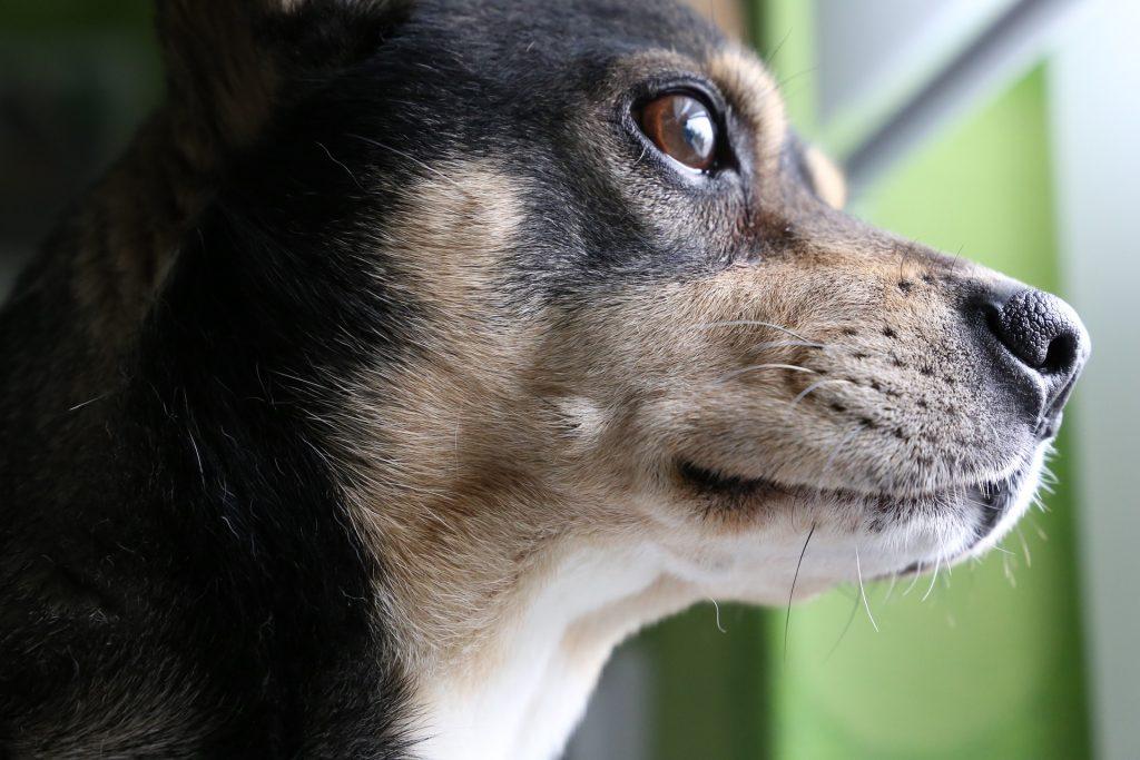 pensamiento en los perros