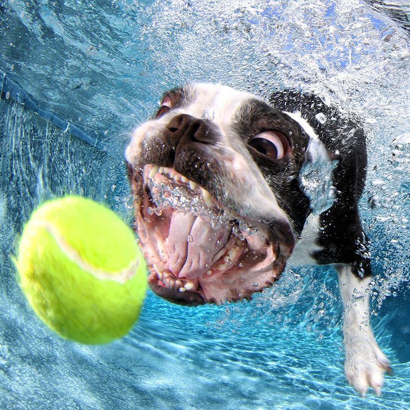 perros bajo el agua atrapando pelota de tenis