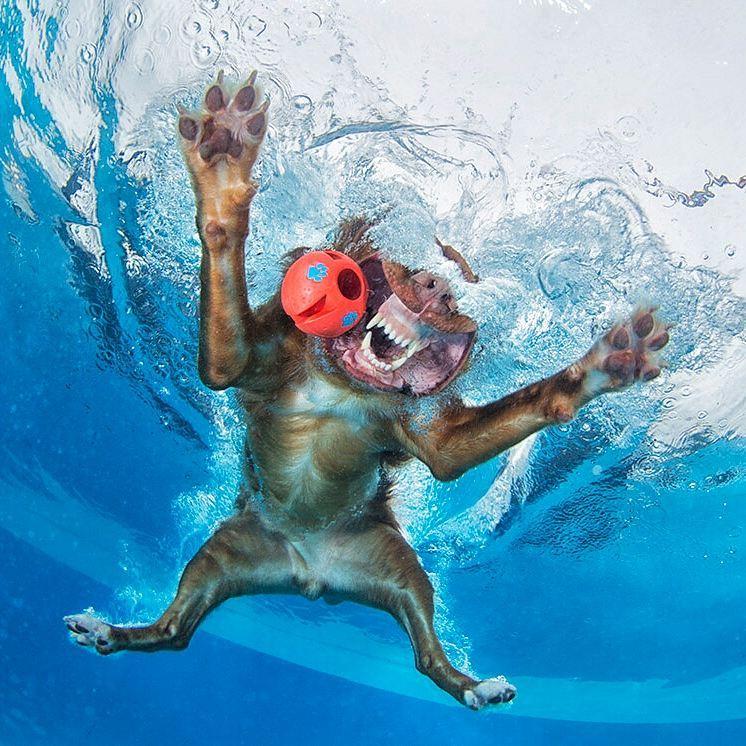 perro bajo el agua nadando