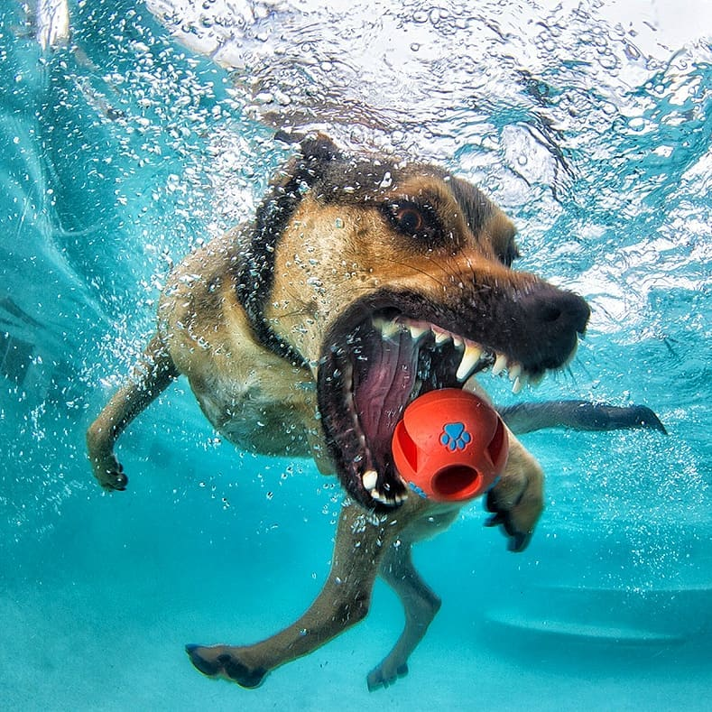 perros bajo el agua con pelota