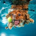 fotos de perros bajo el agua