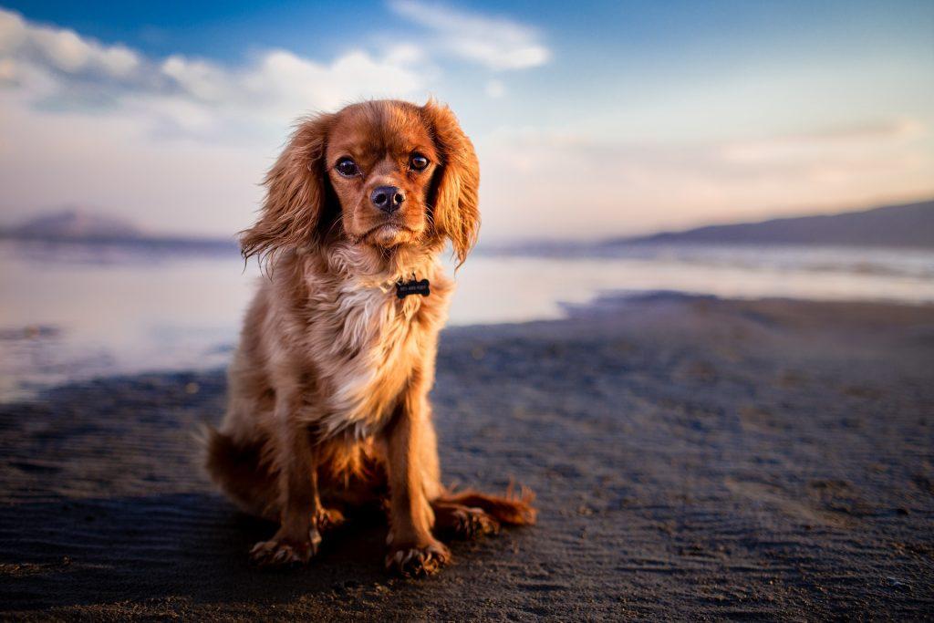 playas con perros 2018