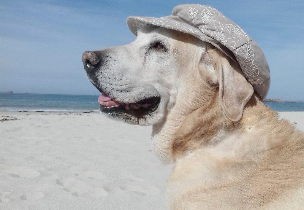 las playas para perros 2018