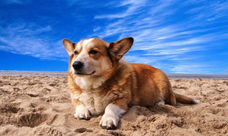 playas para perros 2018