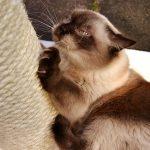 importancia de los rascadores para gatos
