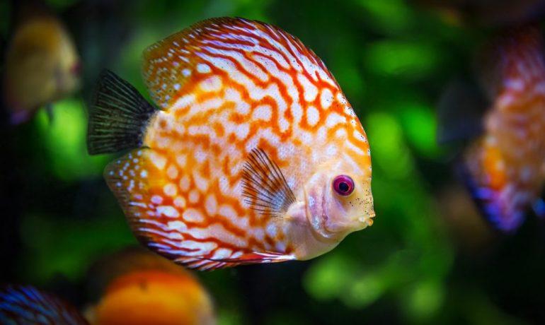 como elegir entre los tipos de peces