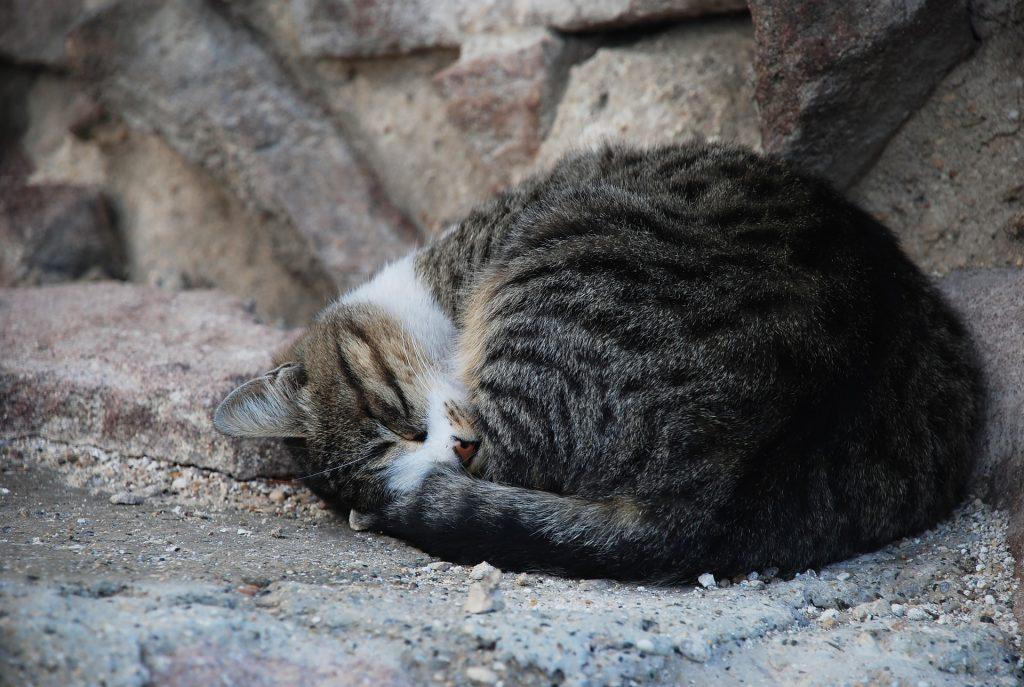 aumenta el numero de animales abandonados